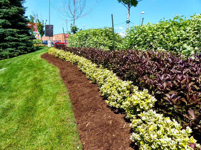 Landscaping, planting, shrubs, lawn maintenance