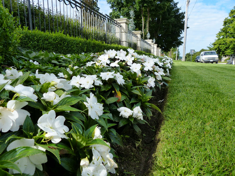 Flower bed planting and pruning