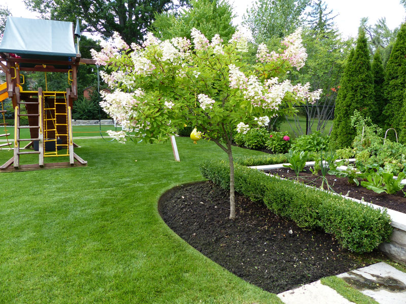 Tree service, tree care, garden design